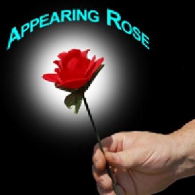 Offerte pazze Comparatore prezzi  Rosa che appare  il miglior prezzo