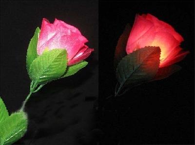 Luci dalla rosa