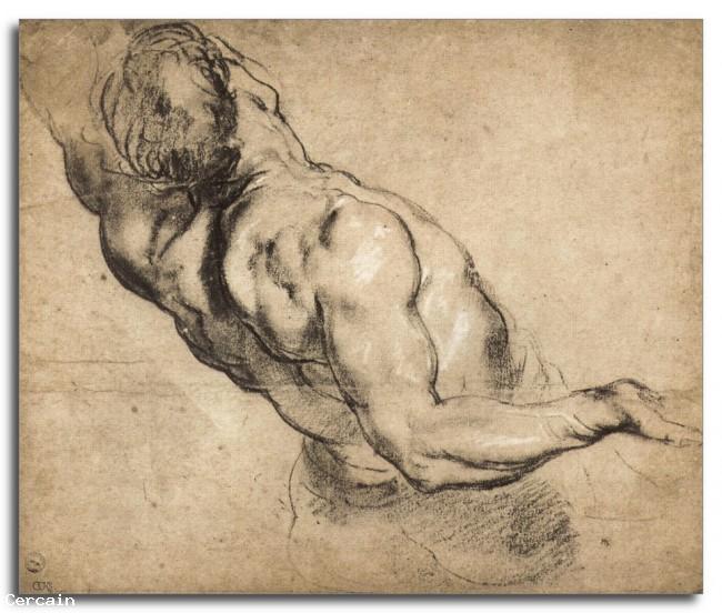 Riproduzione Artistica Studio di torso delluomo di Rubens